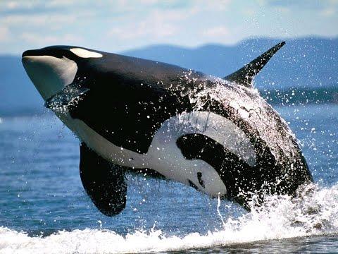 Самые опасные животные  Морской мир