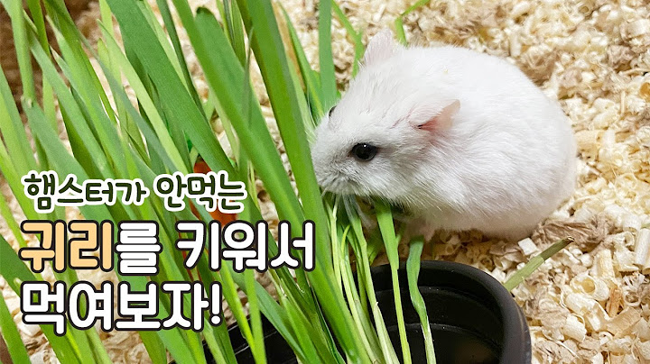 eng)햄스터가 안먹는 귀리를 화분에 키워서 먹여보자! Growing and Feeding Cat Glass for Hamster