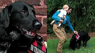 His Babysitter Was Monster He Had No Idea. Then Dog Started Acting Strangely