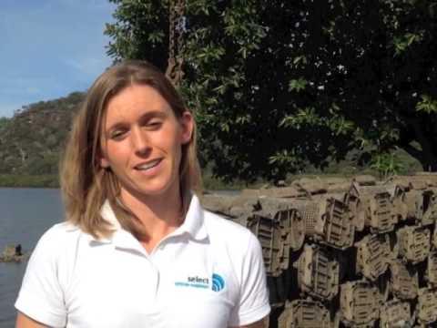 Australias Talking Oysters Episode 2
