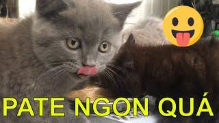😍 Nấu pate cнo mèo cưng ăn như thế nào   How to make homemade food our cats love