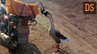 Трогательные фотографии прощавшихся гусей покорили интернет РЖЯ