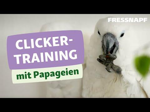 Artgerechte Beschäftigung Für Papageien - Clickern