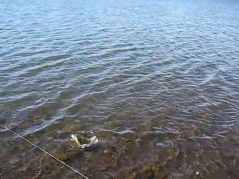 Trout fishing and camping trip to big lake white mount for Fishing lakes in arizona