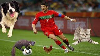 5 Funny animals advertisements ON FOOTBALL FIELD. PART 3.