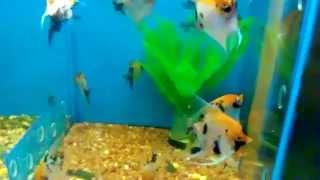 аквариум недорого купить(аквариум недорого купить можно тут http://alexshop24.ru/wppage/akvaopt/ http://zooelen.ru посмотреть прайс и связаться со мной...., 2015-04-22T18:48:18.000Z)
