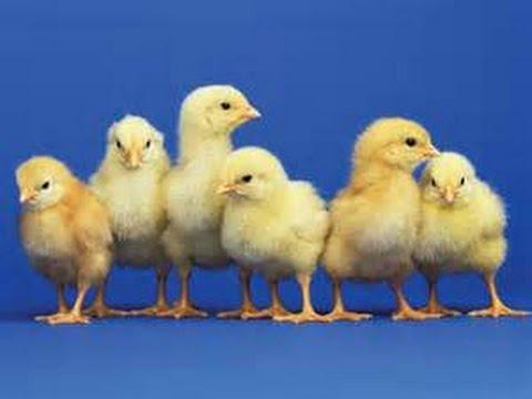 Charity Tuesday - VEGAN Animals Environment World Hunger Health Random Acts of Kindness Pay Forward
