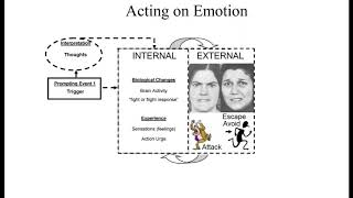 How DBT Helps with Emotions