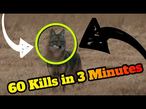 60 Predator Hunting Kills in 3 Minutes!!! EPIC predator hunting montage!