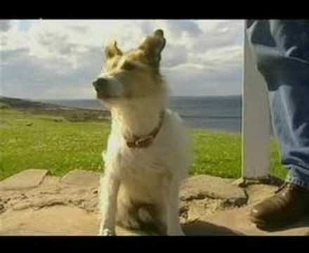 Chalky the dog - favourite clips