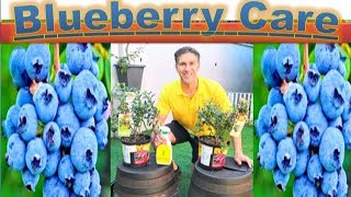 All About BLUEBERRY CARE & PLANTING  in detail |  Better in POTS than InGround???!!!
