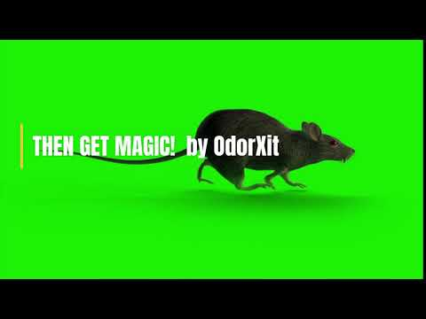 How To Get Rid Of Dead Mouse Smell #smell #odor