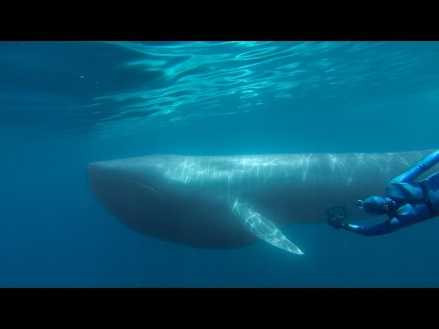 GoPro: The Search for the Blue Whale - A Prelude to