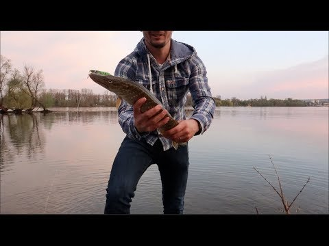 Fishing In Germany: Bit By Fish, First Fish On Rhein, Difference Between US And German Fishing