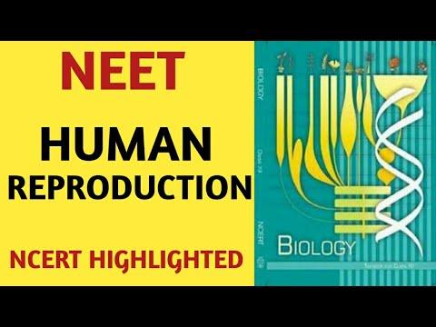 Human Reproduction /Class 12/NCERT/Chapter 03/Quick Revision  Series/NEET/AIIMS/JIPMER/BIOLOGY