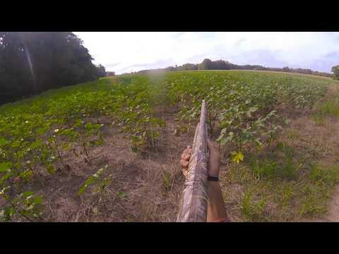 Deer Hunting W/ Dogs Big Bucks Hunting Club