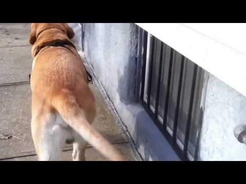 Dog helps owner bring groceries into the house