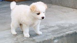 人を見たら盗人と思えがモットーの父が預かった子犬を連れて帰ってきたんだけど… thumbnail