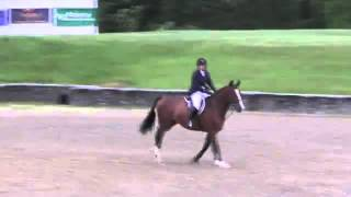Video of Pollux ridden by Alexandra Murphy from ShowNet!