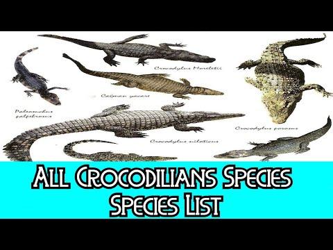 All Crocodilians Species - Species List