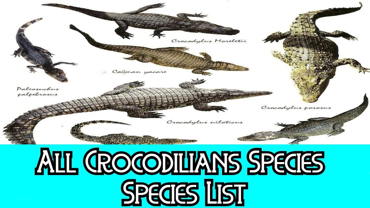 ef9b92d8e All Crocodilians Species - Species List - YouTube