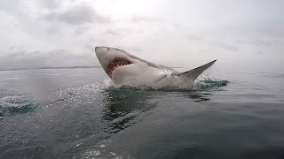 Repeat youtube video Great White shark diving - South Africa