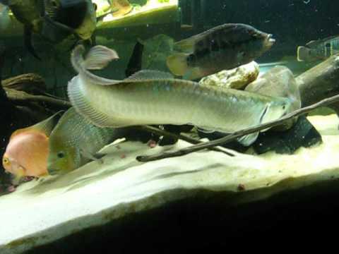 Acuarios de exhibicion en buritaca peces ornamentales for Acuarios ornamentales