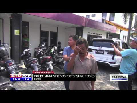 Indonesian Police Bust Illegal Ivory Ring in Riau Province