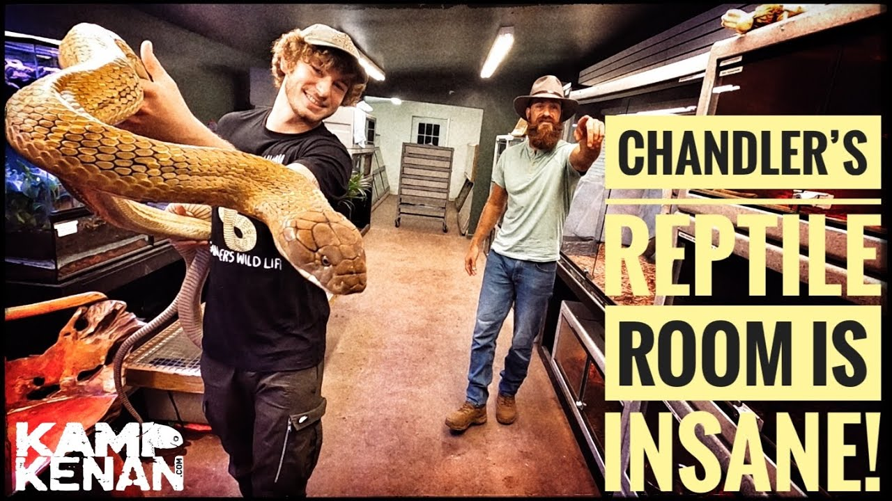 So many Dangerous Snakes & Lizards at Chandler's Wild Life!