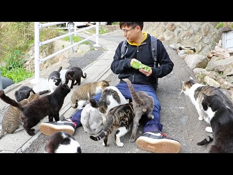 Guy Gets Swarmed by Cats on Japan's Cat Island!
