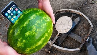 Can Watermelon Protect iPhone X From Giant Bear Trap?!