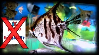 Why you should not buy your fish from Petco or petsmart!