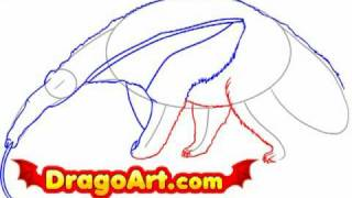 How to draw an anteater, step by step
