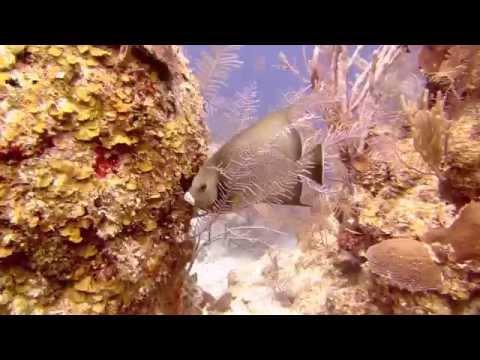 Belize, Diving in Blue hole, Half moon, Aquarium. May 19 2014