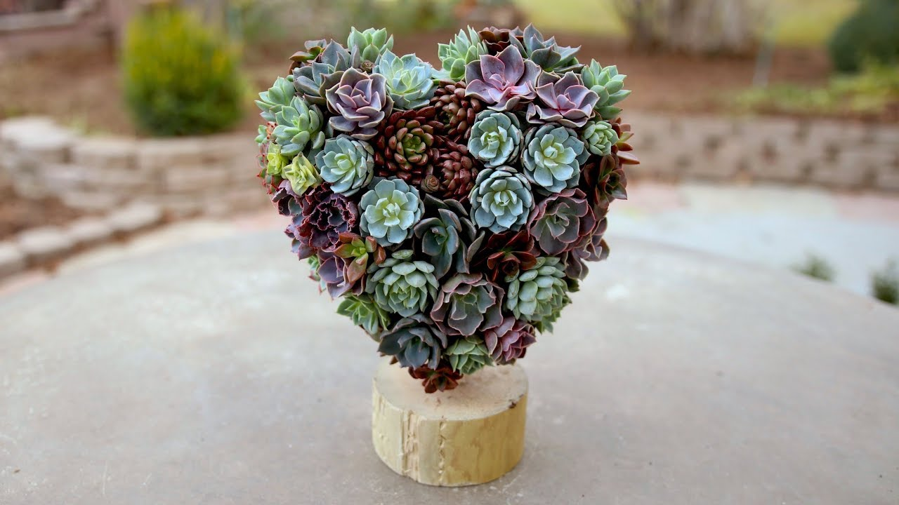 valentine-s-succulent-heart-topiary-garden-answer