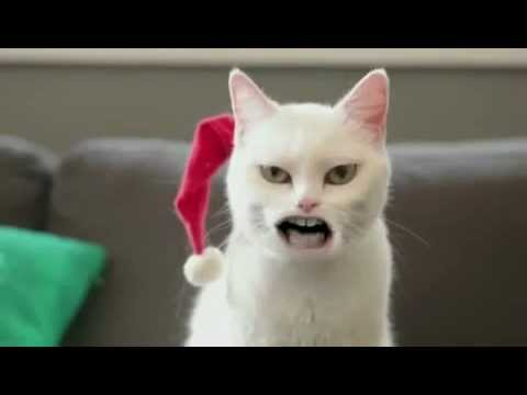Katzen Song