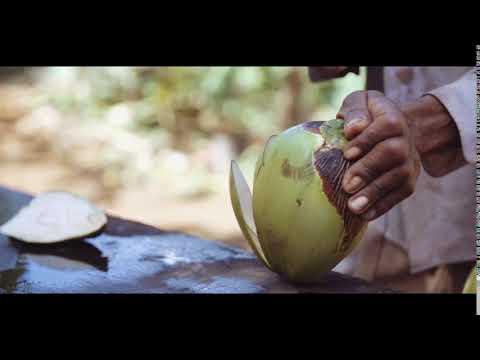 Cutting Fresh Coconut