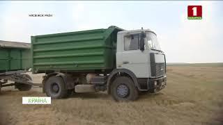 У Беларусі актыўна ідзе ўборка збожжа. КРАІНА