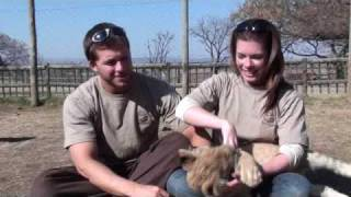 Volunteering at Lion Park, South Africa
