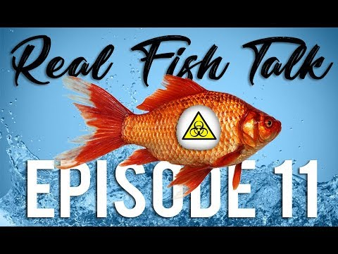 Real Fish Talk : FIGHTING FUNGAL INFECTIONS #11