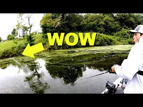 These Fish are GIANT!!! --Frog Fishing a HIDDEN Lake