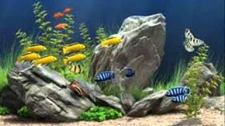 Freshwater Aquarium Plants.wmv