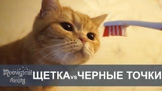 Часть3:ПИЛИНГ для кошек: щетка при кошачьем акне