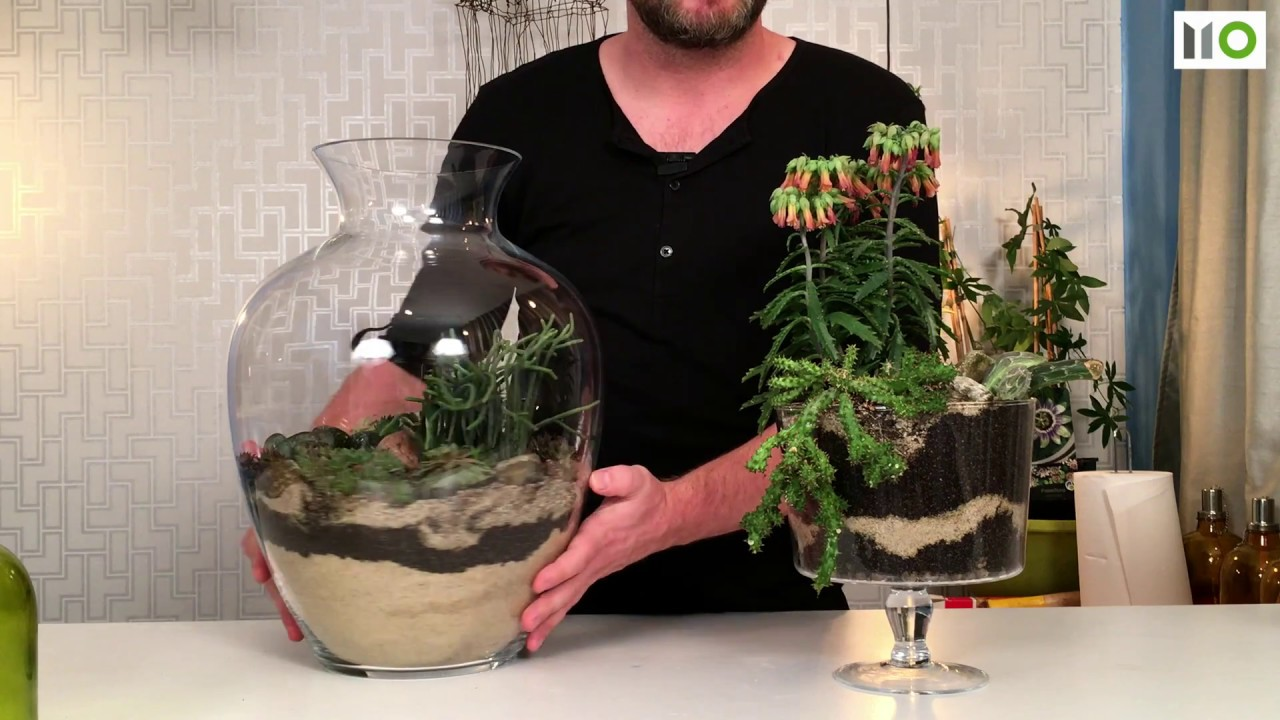 Sposób Na Sukulenty W Szkle Diy Succulents Terrarium S01 E05