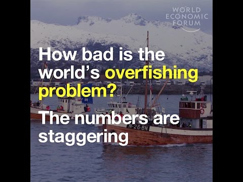 How Bad Is The World's Overfishing Problem? The Numbers Are Staggering