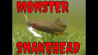 SNAKEHEAD FISHING SOUTH FLORIDA (in the rain)