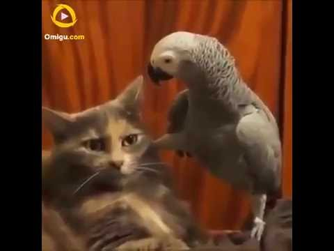 FUNNY PARROT VIDEOS NEW 2016 WITH KIDS