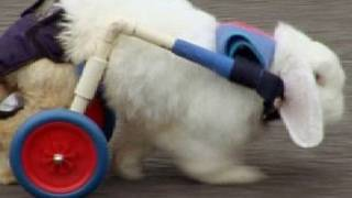 Special Needs Pets | Rabbit Run | Channel 4