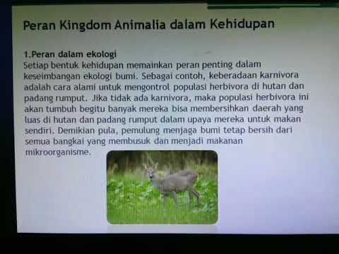 Image of: Platyhelminthes Kingdom Animalia x5 Youtube Kingdom Animalia x5 Youtube