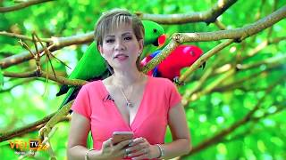 Viet Tv24 - Youtube Downloader Free - M4ufree com